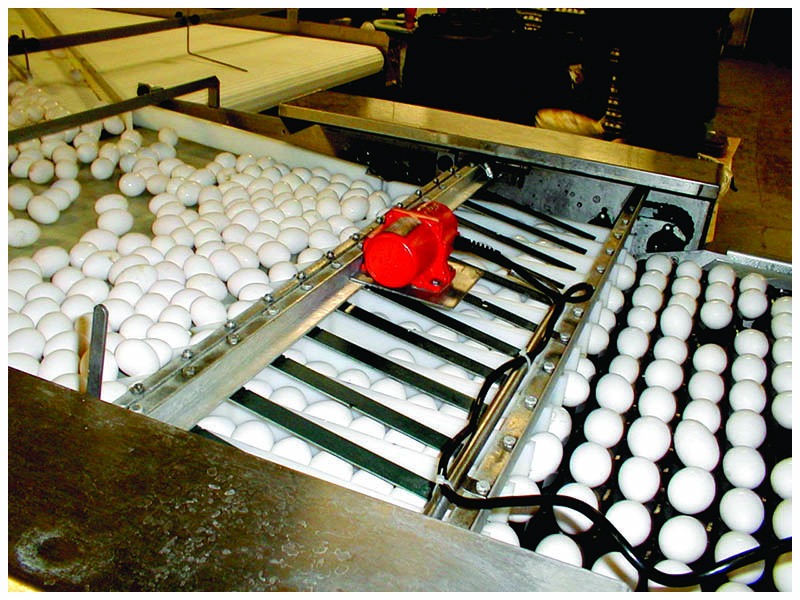 egg size sorting